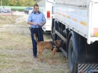 Câinii sibieni, grăniceri pentru UE