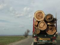 """Pelicula """"Efectul Schweighofer"""" urmărește cazul exploatării pădurilor din județul Covasna"""