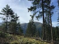 Perspective pentru o pârtie de schi la Avrig