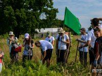 Cum creștem o pădure?  A avut loc etapa de îngrijire a celor 10.000 de puieți plantați la Arpașu