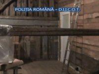Plantanție de cannabis, descoperită de polițiștii de la Crimă Organizată Sibiu | VIDEO