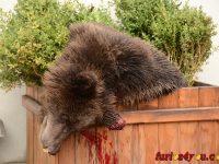 Protest împotriva uciderii ursului din Sibiu, la Cluj