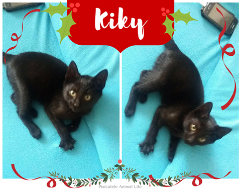 Adoptă un prieten – Kiky