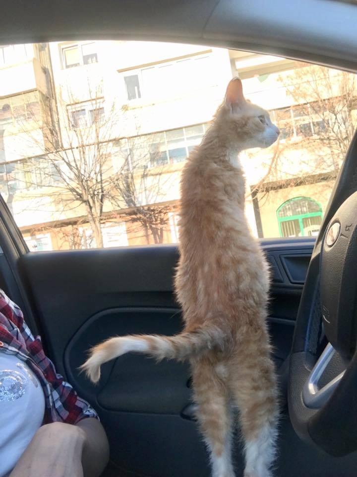 Adoptă un prieten – Pedro | O campanie AnimalLife și Mesagerul de Sibiu