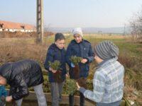 Luna Plantării Arborilor la Ocolul Silvic Miercurea Sibiului