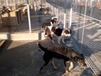 Câinii, în colimatorul Consiliului Județean