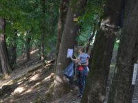 Curățenie în Parcul Sub Arini