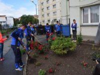 Studenții și elevii sibieni au înverzit Sibiul cu peste 300 de plante | GALERIE FOTO