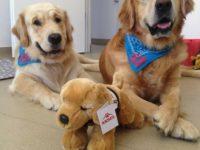 Campanie de strângere de fonduri pentru terapia cu câini, pentru copiii autişti