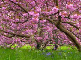 Când revine primăvara? ANM anunţă cum va fi vremea după acest weekend deosebit de rece