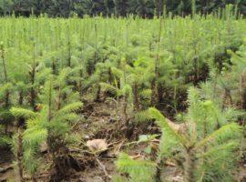 Luna plantării arborilor (P)