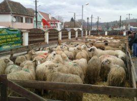 Sprijin pentru fermierul care a pierdut 100 de ovine într-un incendiu