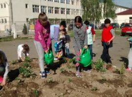 Fructe și legume, plantate pe banii Consiliului Județean