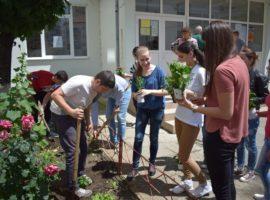 """Studenții și elevii plantează flori și plante ornamentale în campania """"Iubim Sibiul, să-l lăsăm să respire!"""""""