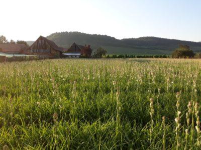 Bani de la Guvern pentru turismul din județul Sibiu