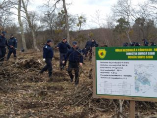 4.000 de puieți de stejar, plantați de jandarmii sibieni în zona Daia