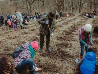 Puieți de gorun și paltin vor fi plantați în zona Gușterița