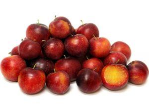 Leacuri din natură – CORCODUȘUL (Prunus cerasifera)