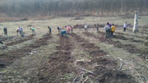 Peste 150 de hectare vor fi împădurite, în județul Sibiu, în această primăvară
